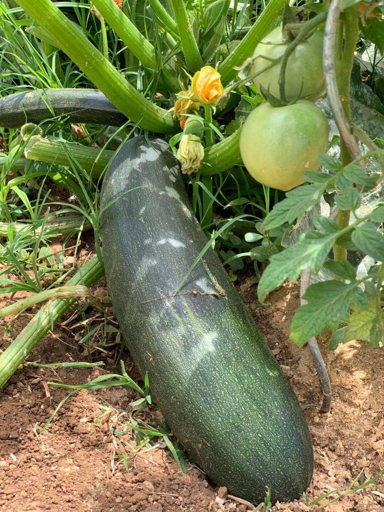 Plantation de légume