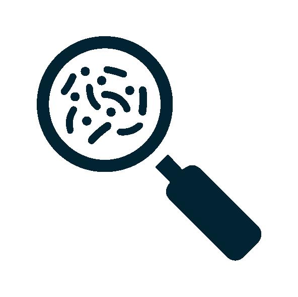 micro-organismes observés à la loupe